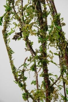 Moss Covered Branches 5ft | 3-4 branches *for bathroom or breezeway?