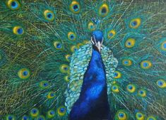 The peacock tail, cm, oil on canvas Peacock Tail, Science And Nature, Oil On Canvas, Wildlife, Painted Canvas, Oil Paintings, Art Oil