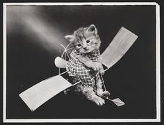 The Aviator, 1914. 15 vintage cat photos that prove people have always loved them