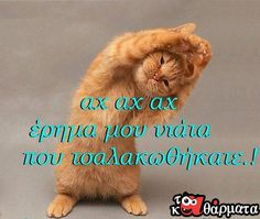 Funny Greek Quotes, Funny Quotes, Good Morning Messages, Just For Fun, Make Me Happy, Jokes, Google Search, Ravelry, Yoga
