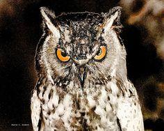 Great Horned Owl Digital Art Bird Giclee Print by GrayWolfGallery, $25.00