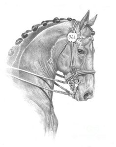 Title: Dressed In Style Artist: Kelly Six Medium: Drawing - Pencil  Description  This is a drawing of one of my horses at a show in Grass Valley, Calif.