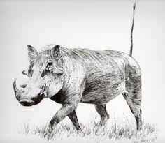 Warthog study Bugs Bunny Drawing, Animal Line Drawings, Nature Animals, Wild Animals, African Animals, Baby Dogs, Pet Birds, Illustration, Wildlife