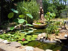"""This man made pond features a """"big pond"""" in the front and a """"little pond"""" behind the fountain lady, filled with a millions of gold fish that are the spawn of two single fish."""