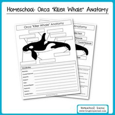 14 Best Orca Crafts For Kids Images In
