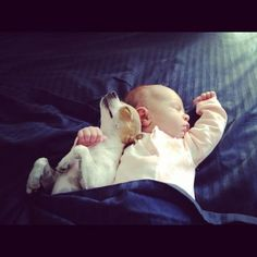 chihuahua and baby