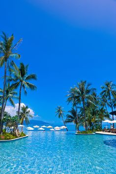 Infinity pool, Melati Beach Resort and Spa, Koh Samui (island), Gulf of Thailand, Thailand #PalmTree