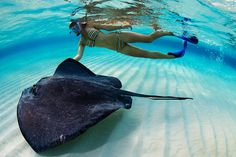 Snorkeling with the underwater life!