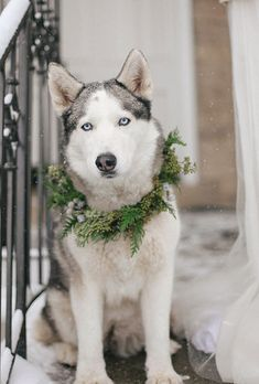 Brides.com: . This winter-loving Husky dressed the part for this seasonal wedding. Wearing a wreath of holiday-inspired greenery and berries, he's the perfect addition to outdoor portraits.
