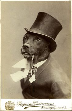 Vintage dogs: Dog with a pipe. Copyright Statham Cook Collection. From The Guardian.
