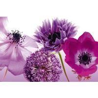 PURPLE SUMMER #flowers