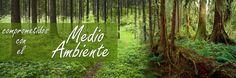 PROTEGIENDO EL MEDIO AMBIENTE, MADERA CERTIFICADA. COMPROMETIDOS A LA REHABILITACION DE TIERRAS Y SIEMBRA DE ARBOLES.