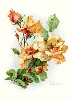 YELLOW PEACH ROSES by Catherine Klein Vintage Flowers Digital Image for Cardmaking Scrapbooking Altered Art Mixed Media