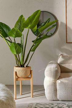 Eva Curcuma Potted Faux Tree is part of Home Accessories Shop Urban Outfitters Potted faux eva curcuma palm tree that brings welcoming energy to your space, no upkeep needed Featuring greenery that - Faux Plants, Indoor Plants, Potted Plants, Indoor Plant Decor, Ikea Plants, Flower Plants, Silk Plants, Cactus Flower, Indoor Gardening