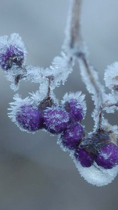 Trendy Ideas For Flowers Background Iphone Winter Winter Szenen, Winter Magic, Winter Colors, Winter Time, Winter Flowers, Flowers Background, Iphone 5 Wallpaper, Snow And Ice, Winter Pictures