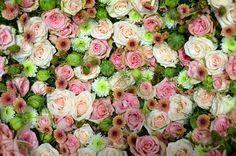 Blütenmeer, Розовый, Роуз