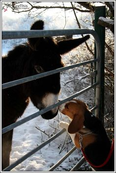 This is so beagle like! They have loving souls for other animals.... except rabbits! Rabbits run, and are fun to chase!