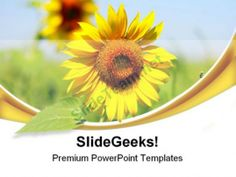 Sunflower Beauty PowerPoint Templates And PowerPoint Backgrounds 0511 #PowerPoint #Templates #Themes #Background