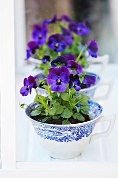 Pansies in blue and white bowls