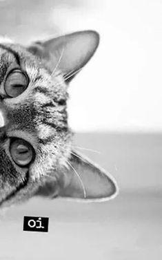 Oi meu Amor!!!Bom Dia meu Tesouro!!! ♥♥ ...nosso pequeno gato veio até nós!;):
