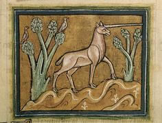 Unicorn, English Bestiary (Royal 12 F), author unknown, 13th century, housed at the British Library.