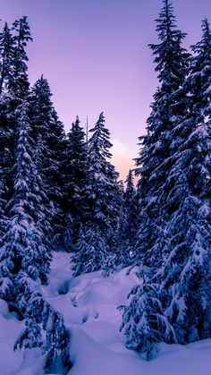 902 Fantastiche Immagini Su Neve Nel 2020 Neve Paesaggi E Scene