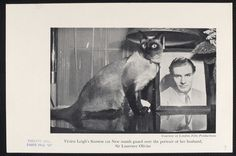 """Vivien Leigh's Siamese cat New stands guard over the portrait of her husband, Sir Laurence Olivier."""