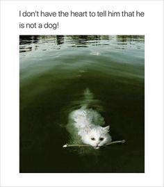 cat swimming funny memes