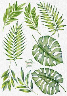 Tropical leaves. Exotic plants. Botanical illustration.