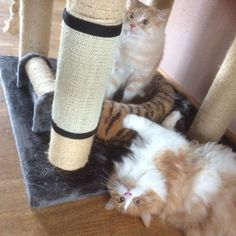 Gentle Safe Cat Scratch Pad Board Protecting Furniture Foot Natural Sisal Cats Scratching Post Toy For Cats Tower Climbing Cat Toys