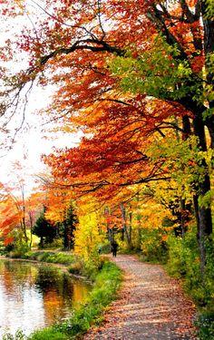 An autumn walk (New Brunswick) by Gwenaëlle Muggianu
