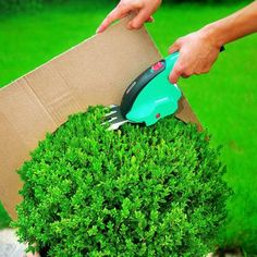 Popular Buchsbaum schneiden mit Schablone