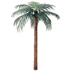 12' Coconut Silk Palm Tree -Green ** Click on the image for additional details.
