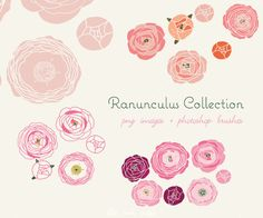 CLIP ART and Photoshop brushes - Ranunculus Collection - for commercial and personal use