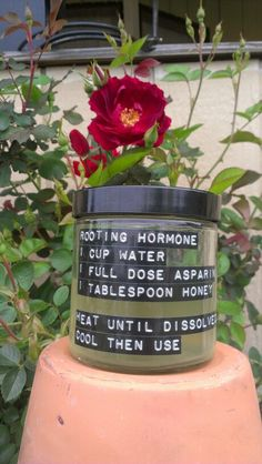 Easy homemade rooting hormone soloution