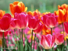 Иногда цветы это то что успокаивает  меня они так красивы.