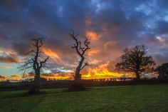 The old chestnut trees at Newhouse Farm nr Dawlish Vintage Photographs, Devon, Old Things, Explore, Sunset, Trees, Outdoor, Outdoors, Tree Structure