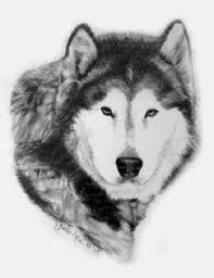 drawings of dogs - Google Search