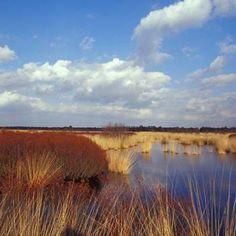 Engbertsdijksvenen is een uitgestrekt veengebied met heideterreinen en vennen in Twente. Een restant van het grote veenmoeras dat ooit het noordoosten van Nederland bedekte.