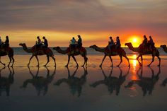 Camel ride - Cable Beach, Australia
