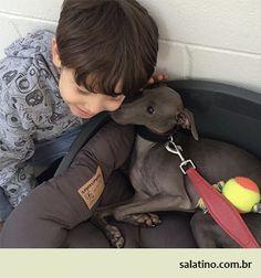 Best Friends! #dog #salatino #clubesalatino #canil #perro #dogs #cute #love #nature #animales #dog #ilovemydog #ilovemypet #cute #galgos #greyhound #galgoespanhol #galgo