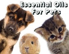 5 Essential Oils to Have for Your Pets and How to Use Them