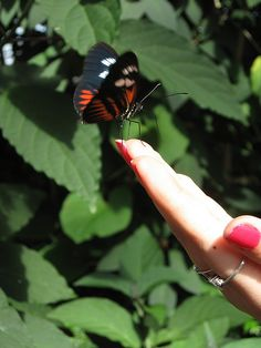 my cousin holding a butterfly at frederick meijer gardens