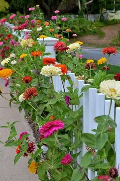 15 Heat-Tolerant Flowers and Plants for Your Summer Garden - 15 Heat-Tolerant F. - 15 Heat-Tolerant Flowers and Plants for Your Summer Garden – 15 Heat-Tolerant Flowers and Plants for Your Summer Garden Zinnia Garden, Cut Flower Garden, Flower Garden Design, Beautiful Flowers Garden, Beautiful Gardens, Flower Gardening, Flowers In Garden, Garden Design Plans, Outdoor Flowers