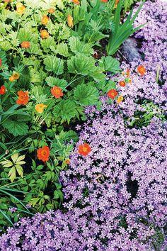 Tulikellukka (Geum coccineum) ja sammalleimu (Phlox subulata) http://www.viherpiha.fi/perennat-ja-sipulikasvit/unelmien-perennapenkki-kevat