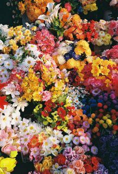 cosmicshortcut:    Rainbow flowers!