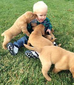 Little boy with his best friends. Pet Shop, Pet Care, Little Boys, Best Friends, Cute Animals, Puppies, Pets, Children, Health Care