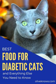 Best Food for Diabetic Cats and Everything Else You Need to Know What to know about diabetic cat and what food to give to your feline friends is very important. Here are guides that can help you! Diabetic Cat Food, First Time Cat Owner, Cat Insurance, Cat Care Tips, Dog Care, Animal Help, Owning A Cat, Outdoor Cats, Gatos
