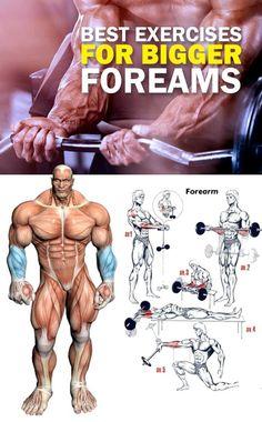 Bigger Forearm Workout Big Biceps Workout, Forearm Workout, Biceps And Triceps, Weight Training Workouts, Gym Training, Gym Workouts, Big Forearms, Muscular Development, Workout Posters