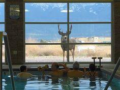 Muley buck watching water aerobics